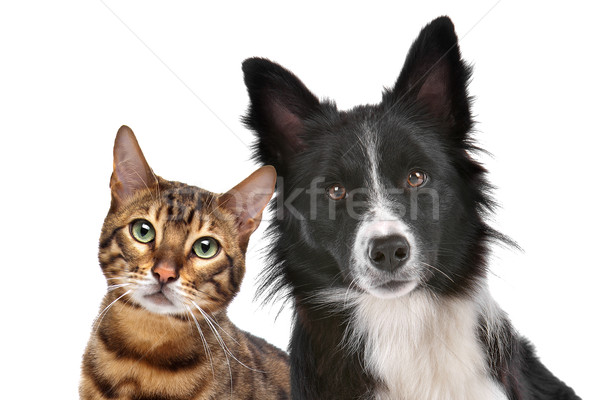 Dog and Cat Stock photo © eriklam