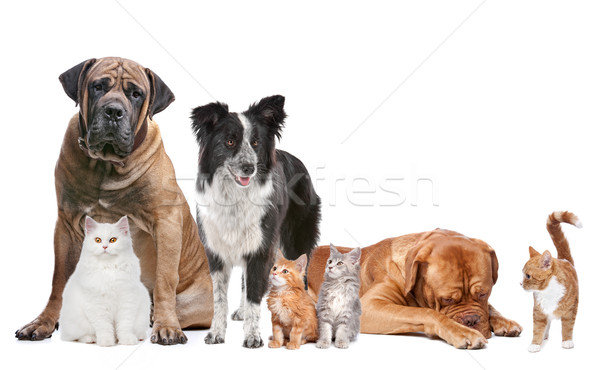Groupe chats chiens blanche chat animaux Photo stock © eriklam