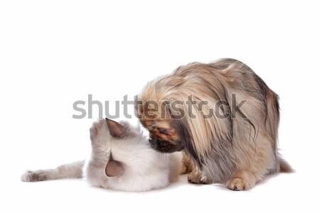 Chien chat blanche amour animaux ami Photo stock © eriklam