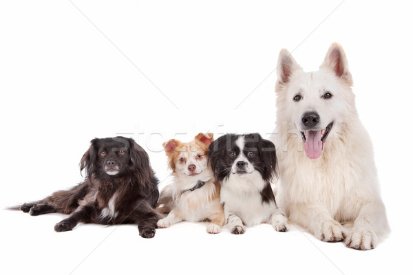 group of dogs Stock photo © eriklam