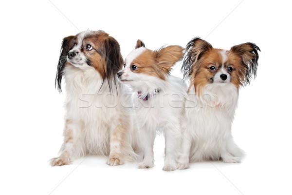 ストックフォト: 3 · 犬 · 白 · 犬 · グループ · 動物