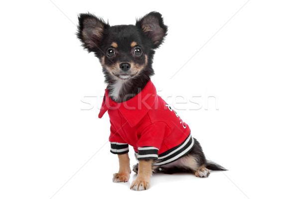 Köpek köpek yavrusu ceket yalıtılmış memeli Stok fotoğraf © eriklam