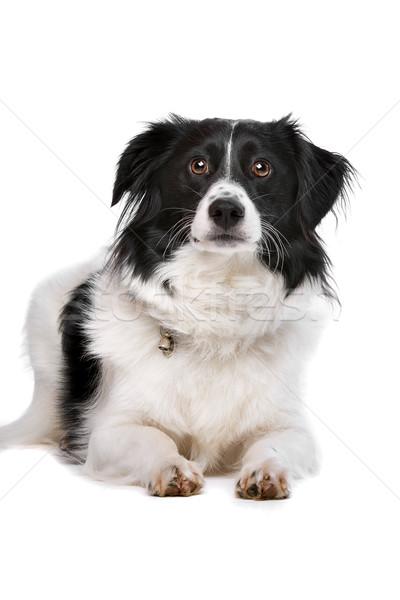 Gemengd ras hond witte dier studio Stockfoto © eriklam