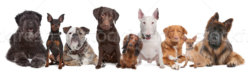 Stock photo: Group of dogs
