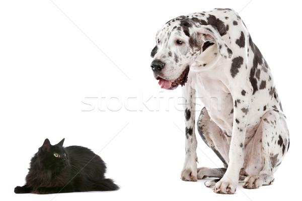 猫 犬 白 目 カップル 黒 ストックフォト © eriklam