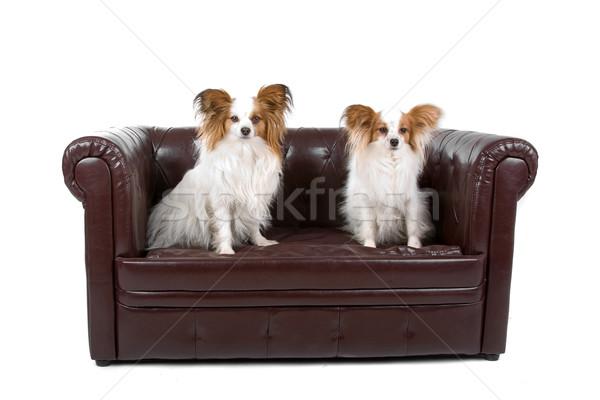 Iki yavru kanepe görmek oturma Stok fotoğraf © eriklam