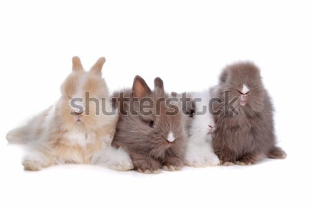 four young rabbits in a row Stock photo © eriklam
