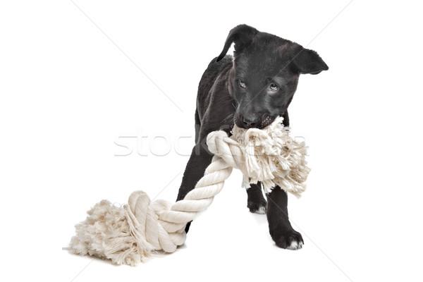 Gemischte Rasse Welpen groß weiß Stock foto © eriklam