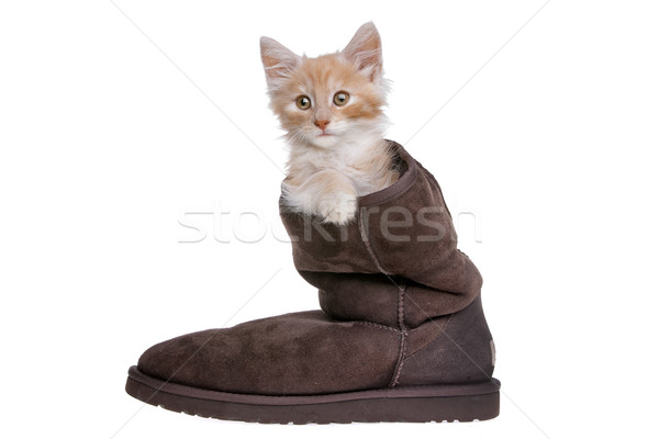 red kitten in boot Stock photo © eriklam