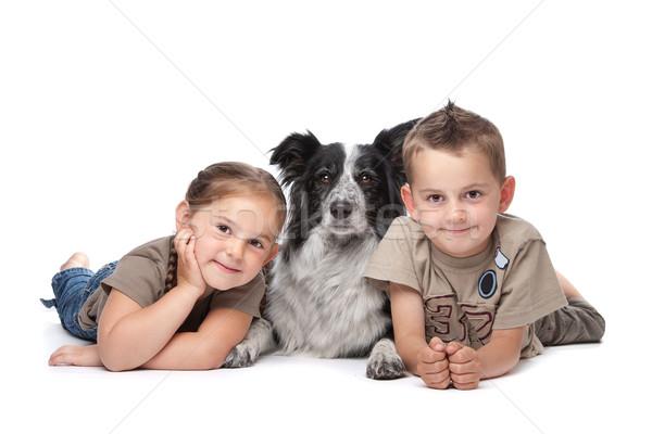 два дети собака Бордер колли овчарка белый Сток-фото © eriklam