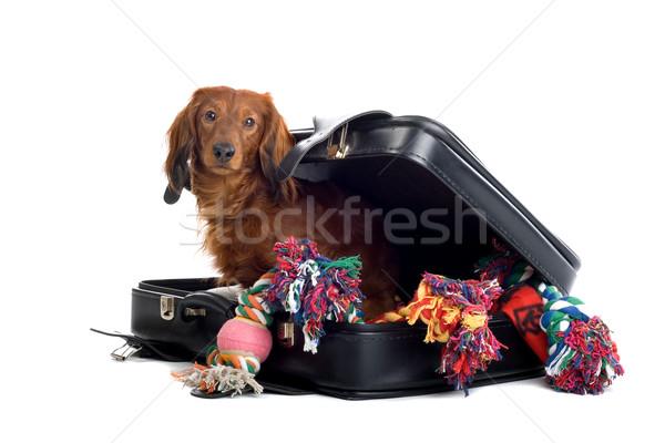 Dog in suitcase Stock photo © eriklam