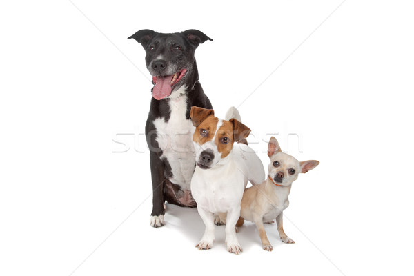 small group of dogs Stock photo © eriklam