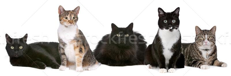 Group of cats Stock photo © eriklam