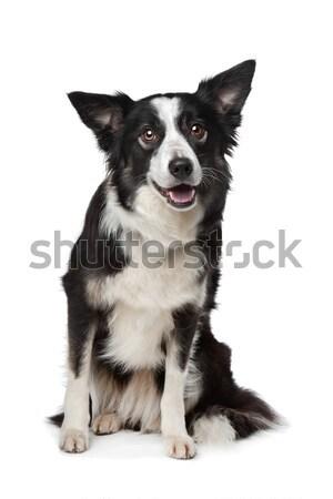 子犬 白 幸せ 小さな 動物 ストックフォト © eriklam