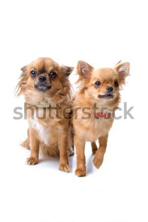 Foto stock: Dos · cute · perros · uno · perro