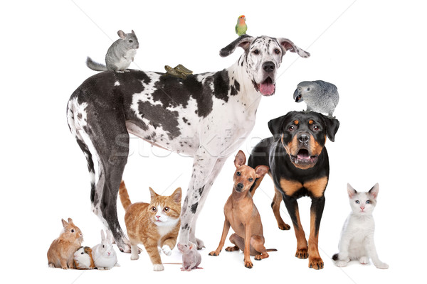 Pets in front of a white background Stock photo © eriklam