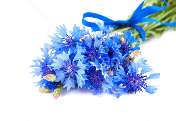 Stock photo: cornflowers