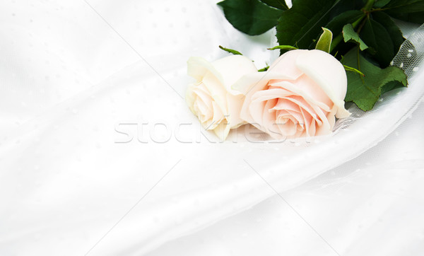 Rosas blanco seda dos flores aumentó Foto stock © Es75