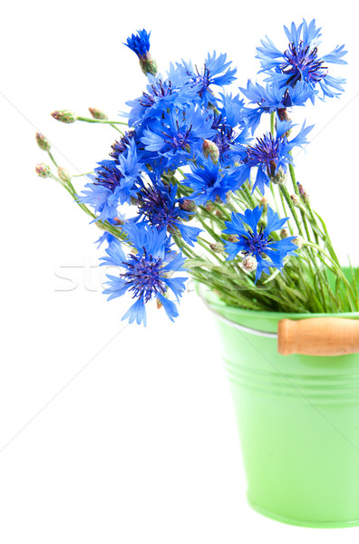 Cornflower Stock photo © Es75