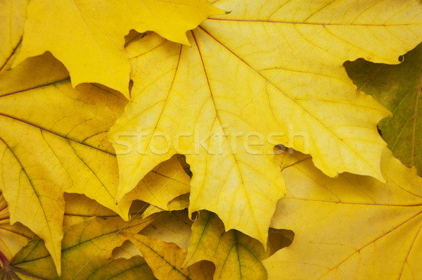 Mixture of Autumn leaves Stock photo © Es75