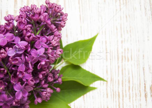 Keret orgona virágok lila fából készült fa Stock fotó © Es75