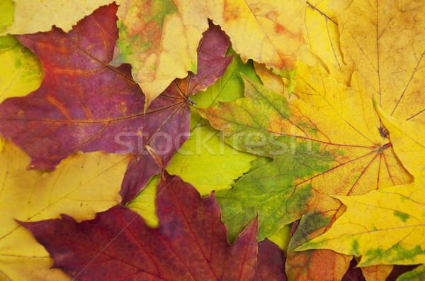 смесь осень дерево аннотация природы Сток-фото © Es75