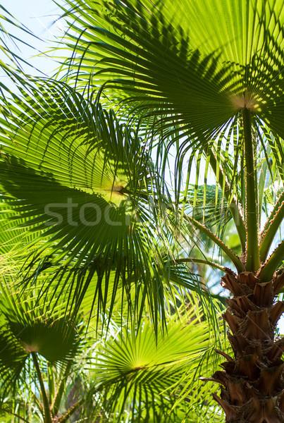 Tropical palmeiras árvore natureza paisagem rua Foto stock © Es75