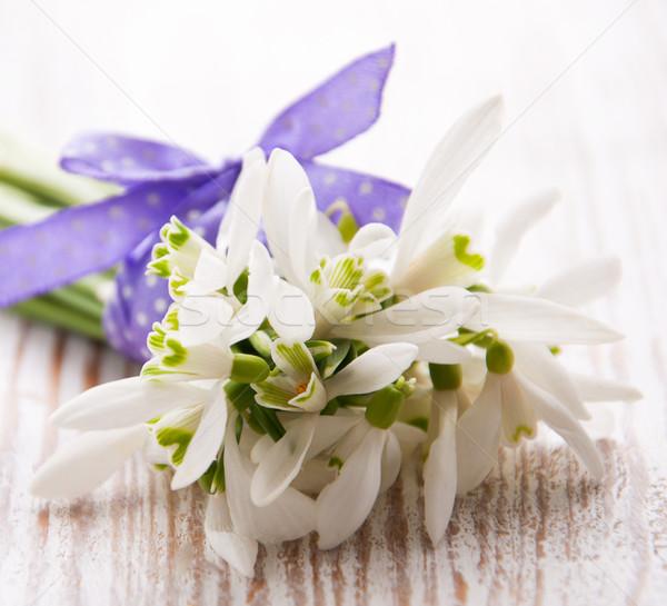Bunch of snowdrop flowers Stock photo © Es75