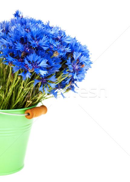 blue cornflowers Stock photo © Es75