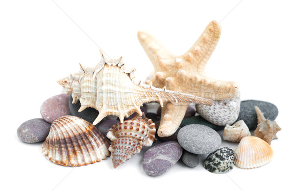 Small heap of sea stones and beige cockleshell Stock photo © Es75