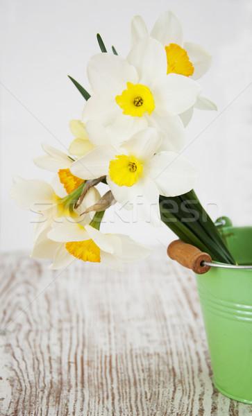 Narcisos primavera velho folha beleza Foto stock © Es75