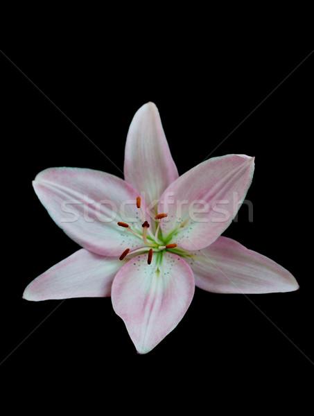 Lilies On Black Stock photo © Es75