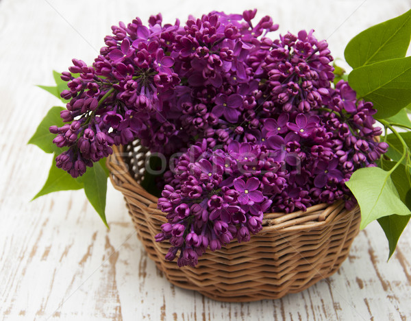 Lata liliowy kwiaty koszyka kwiat Zdjęcia stock © Es75