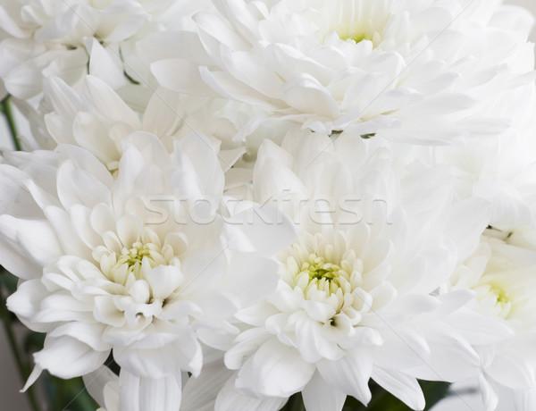Foto stock: Blanco · crisantemo · ramo · flor · primavera