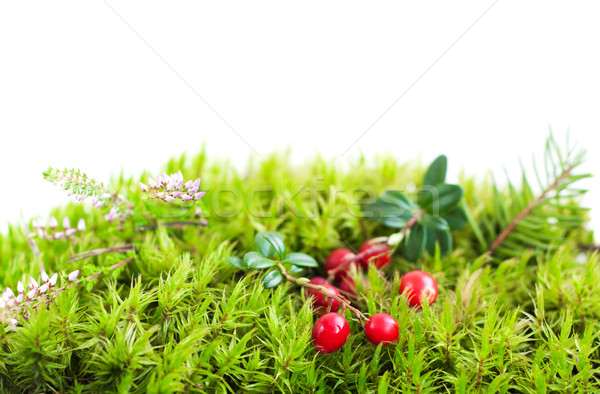 Forest  moss Stock photo © Es75