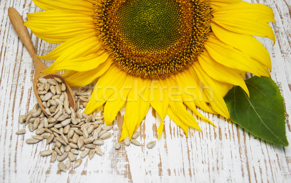 Sunflower with Seeds Stock photo © Es75