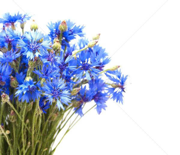 Stock photo: Cornflowers