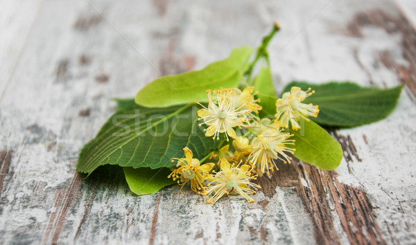 Linden flowers Stock photo © Es75