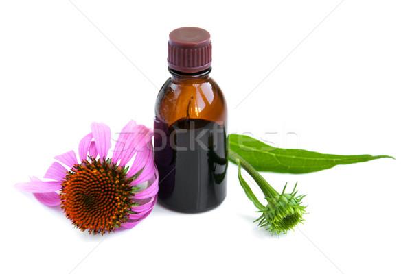 Flores flor medicina planta rosa Foto stock © Es75
