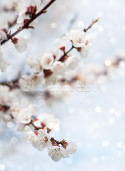 весны Blossom ярко Blue Sky небе цветок Сток-фото © Es75