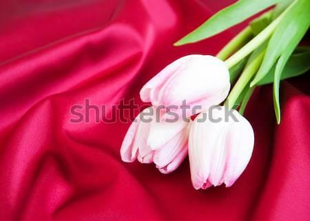 Tulipánok piros szatén kettő rózsaszín természet Stock fotó © Es75