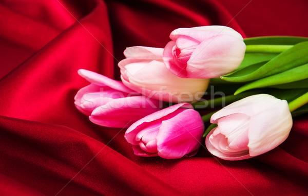 Tulipas vermelho seda rosa flores primavera Foto stock © Es75