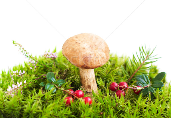 ストックフォト: 森林 · キノコ · 苔 · 食品 · 夏 · 赤