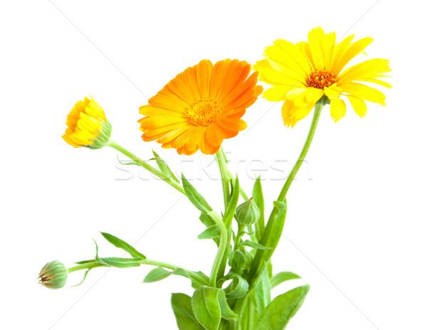 calendula flowers Stock photo © Es75
