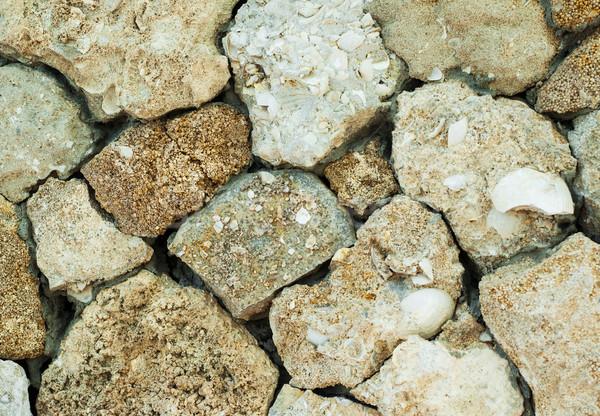 Vieux fossile mur maison résumé design Photo stock © Es75