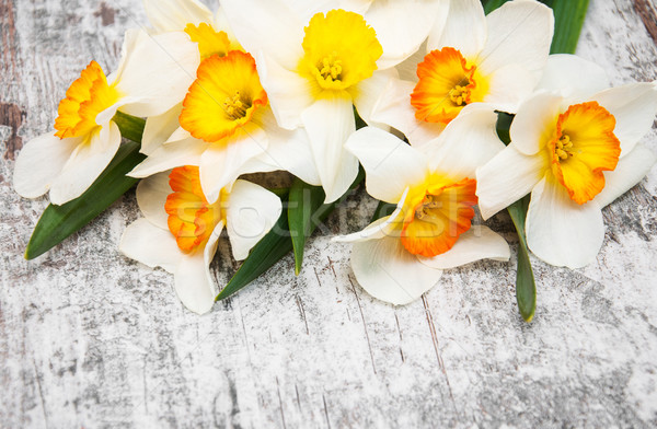 Narcis bloemen oude houten voorjaar oranje Stockfoto © Es75