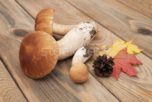 boletus mushrooms  Stock photo © Es75