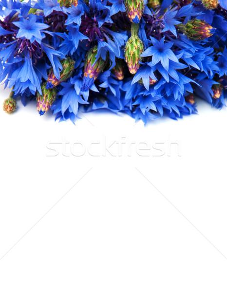 Niebieski odizolowany biały kwiat charakter piękna Zdjęcia stock © Es75