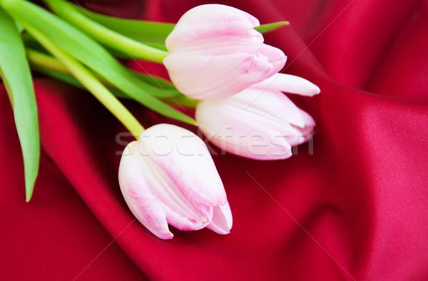 Tulipany czerwony satyna różowy charakter przestrzeni Zdjęcia stock © Es75