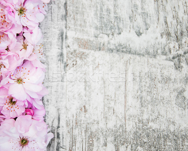Sakura flor velho fronteira rosa Foto stock © Es75